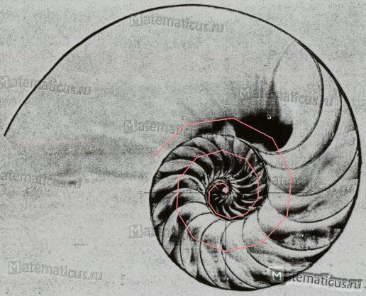 Архимедова спираль ракушка